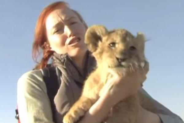 CAPE-UNION-MART–Lion-Cub